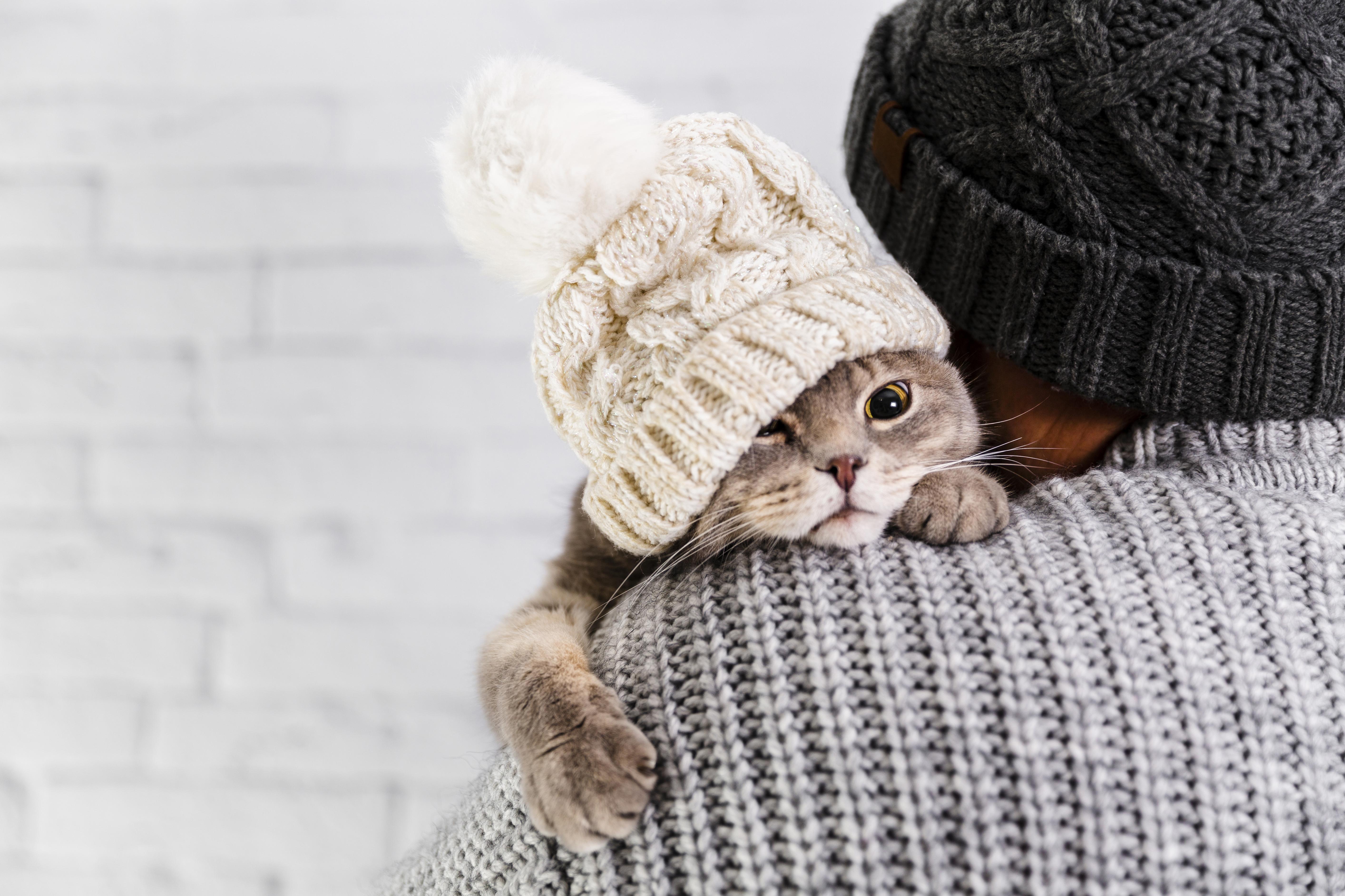 Quais são os cuidados com os pets durante o inverno e o outono?